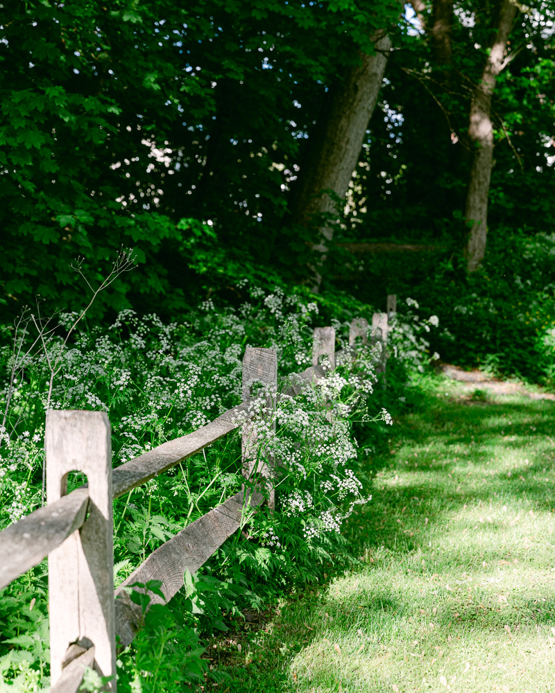 Fence with spring flowers blooming nearby in Sunbeam Park, Frenchtown NJ